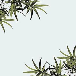 植物主圖背景