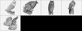 貓頭鷹筆刷