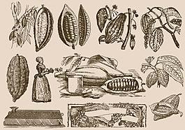 可可豆和加工工艺