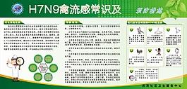 H7N9流感宣傳欄