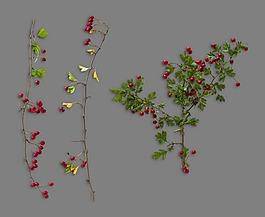形態各異帶紅色果子植物秋季元素