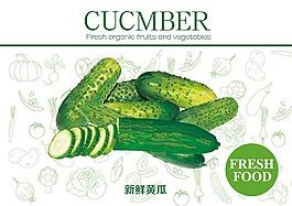 新鮮黃瓜素材