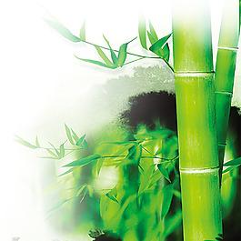 竹子竹節竹葉