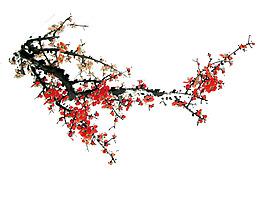 梅花花開樹枝