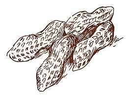 卡通矢量線稿手繪花生商業美食裝飾圖案元素