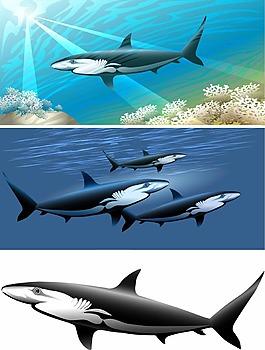 海底的鯊魚