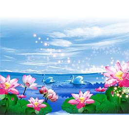 荷花開湖面天鵝戲水背景