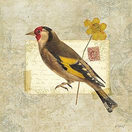 花鳥畫與明信片圖片