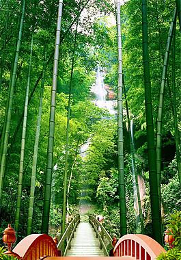 竹林小橋風景圖片