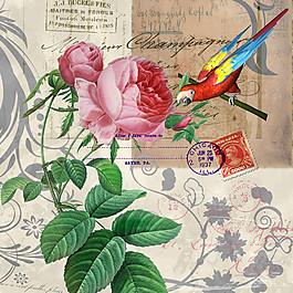 鸚鵡鮮花無框畫圖片
