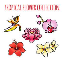 5款卡通熱帶花卉矢量素材