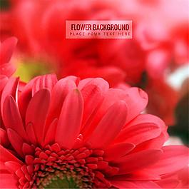 紅色非洲菊背景矢量素材