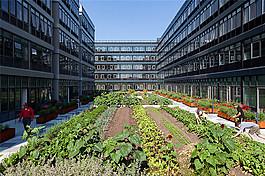 現代建筑花園設計圖