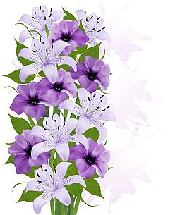 紫色百合花