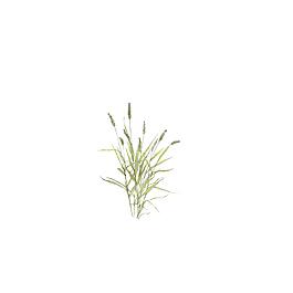 小清新簡約文藝手繪綠色狗尾草