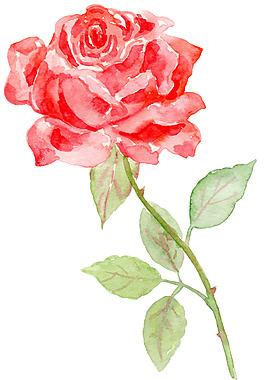 紅色玫瑰520情人節七夕手繪水彩裝飾圖案