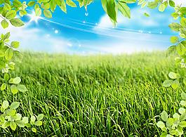 夏季植物自然背景