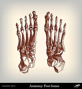 人體腳部關節圖片