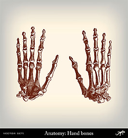 人體腳部關節圖片1