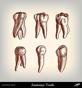 人體牙齒素描圖片
