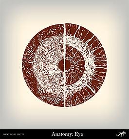 人體眼珠插畫圖片