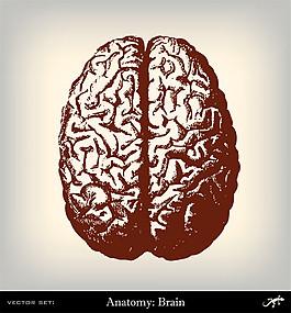 人體大腦插畫圖片