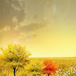 黃昏楓樹背景