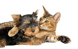 趴著的貓和狗