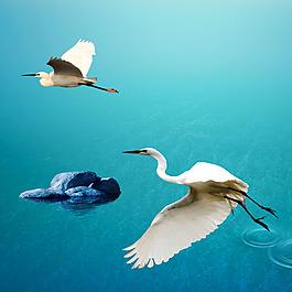 湖面石頭白鷺水波紋素材