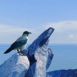石頭湖面白云小鳥素材