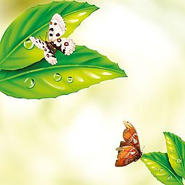 樹葉水珠蝴蝶素材