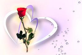 玫瑰浪漫元素桃心視頻背景