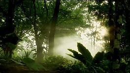 樹林中的霧氣清晨有光