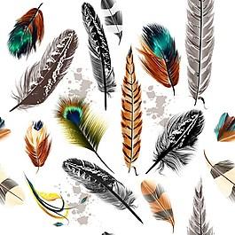 羽毛背景素材