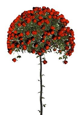 玫瑰小树元素
