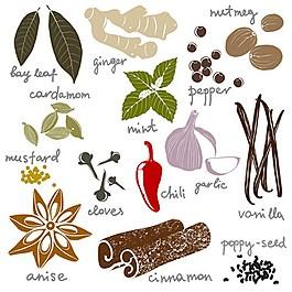 各種植物調料矢量圖