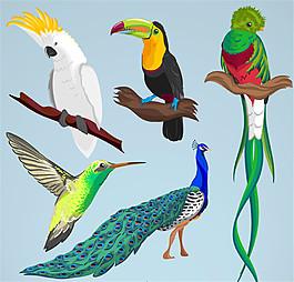 5款彩色鳥類設計矢量素材