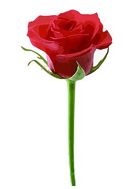 玫瑰花矢量圖