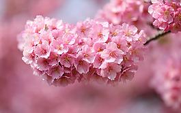 粉色清新花朵背景