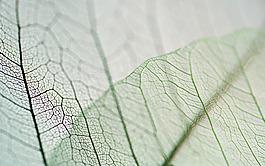清新綠葉紋理背景