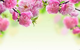 清新玫紅花朵背景