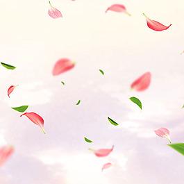 淡粉色飄落的花瓣掉落的樹葉
