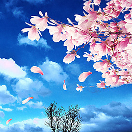 藍天白云花朵花瓣樹素材