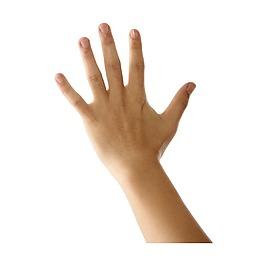 3D立体手掌元素