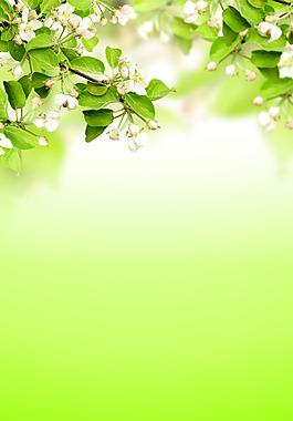 清新绿叶花朵背景