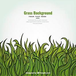 裝飾草的手繪背景