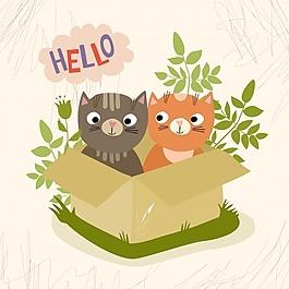 盒子里的貓