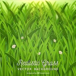 草與花的現實背景