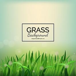 現實的草背景,背景虛化效果