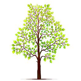 一棵綠樹圖片
